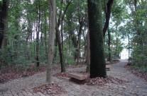Caminhadas